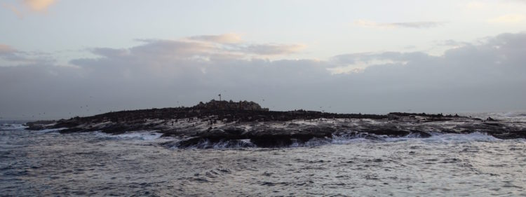 Seal island near Simon's town South Africa great white shark cage diving Sharkweek
