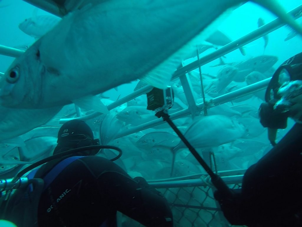 great-white-shark-cage-diving-australia