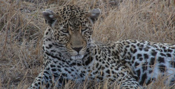 25 Tips for Safari in South Africa