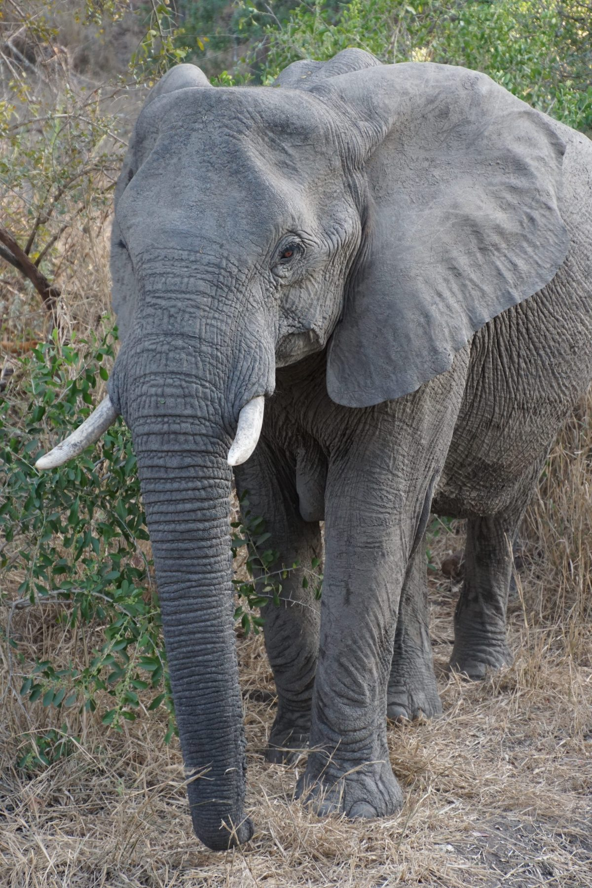 elephant-safari-south-africa