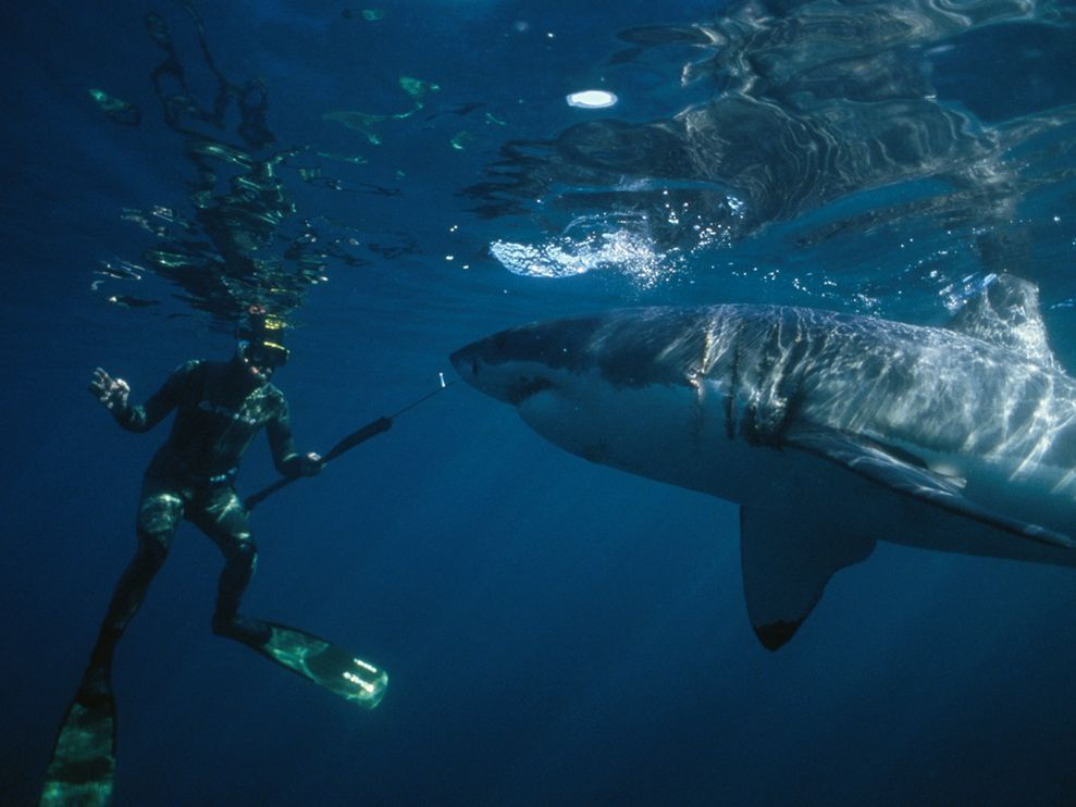 """Interview with Andre Hartman """"Shark Whisperer"""""""
